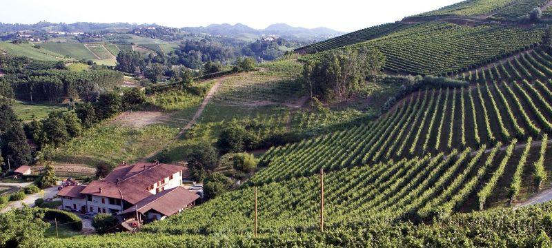 Cantina Malvirà è coccolata da mille colline verdi, dai profili morbidi e caldi.